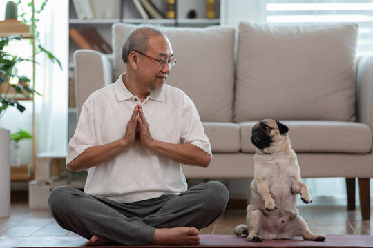 Asian elderly senoir man doing yoga with dog pug breed in living room at home,Happy Retired at home concept