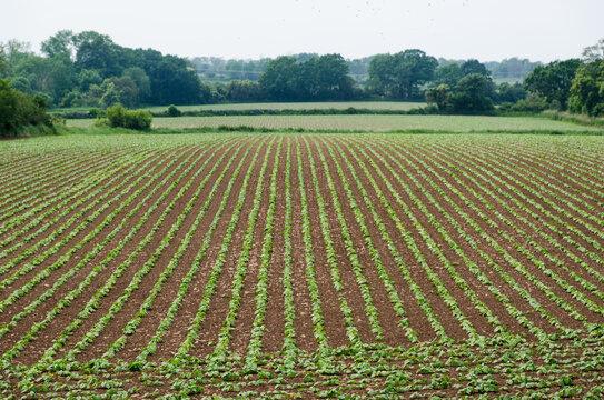 Lines i a beautiful farmers field