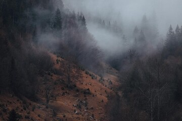 the magic of the Carpathian forest