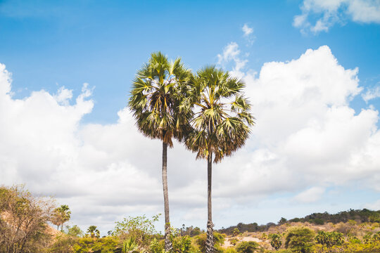 Tropical palm tree with cloudy blue sky