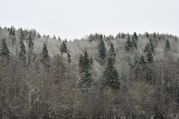 Winter landscape, snowy winter trees