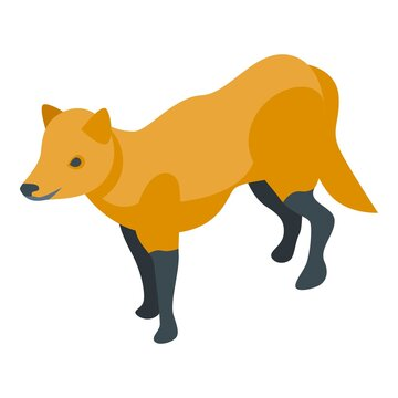 Cute fox icon. Isometric of cute fox vector icon for web design isolated on white background