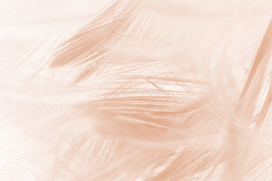 Beautiful brown feather texture pattern background