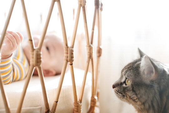 Adorable baby in a white sunny bedroom. Newborn baby is resting in bed. Family morning at home. Cat sitting with child.