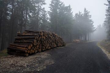 Fototapeta stos ściętych drzew. Sosny przygotowane do wywozu do tartaku obraz