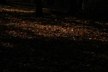 autumn leaves on the ground Wall mural