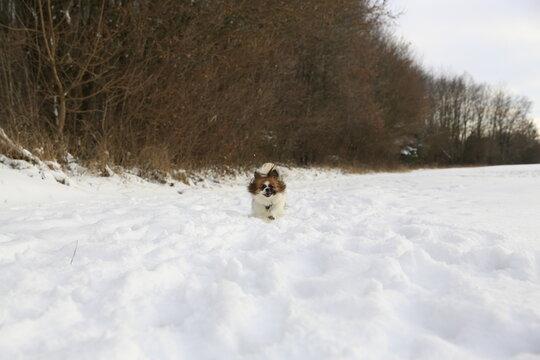 Kleiner Hund rennt durch den Schnee