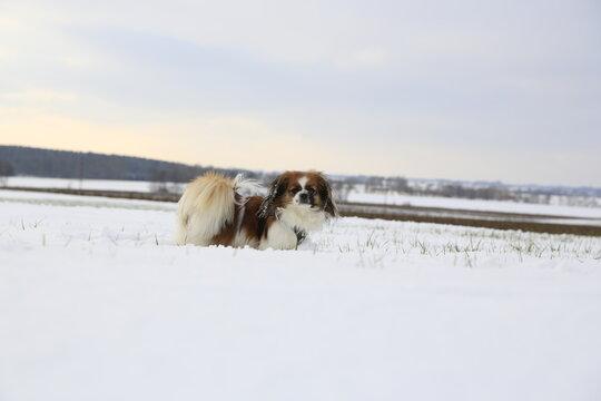 Kleiner Hund in einer Winterlandschaft