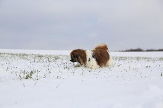Kleiner Hund im Schnee, oh du schöne Winterzeit