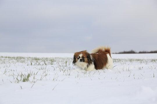 Kleiner Hund im Schnee - Hund im Winter