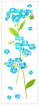 Card with forget me not flowers isolated on white background. Blue and green illustration.