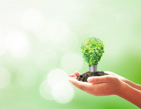 Earth day concept: Developer hand holding light bulb of growth tree on blurred green nature background