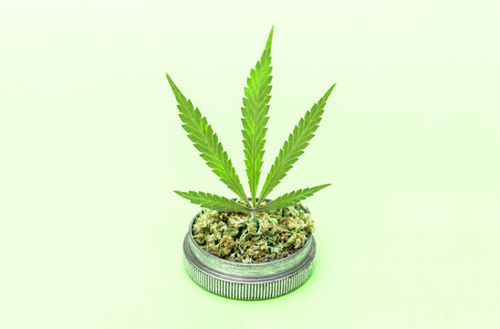 Marijuana leaf on grinder full of chopped weed on light green background.