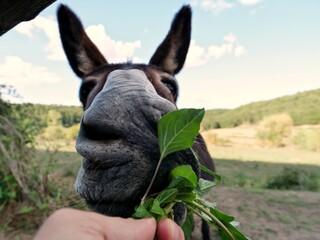 Close-up Of Hand Feeding Donkey On Field