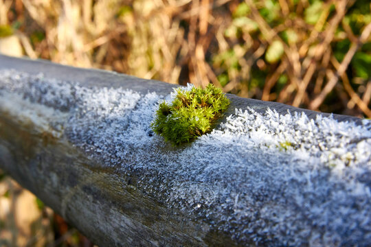 moss on a fence with frost