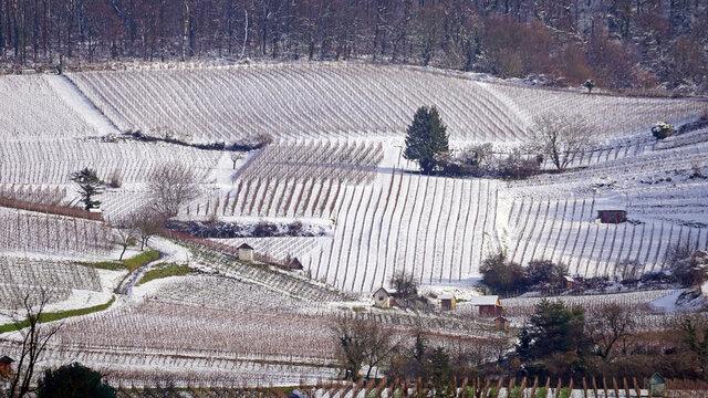 Heppenheimer Weinberge im Winter