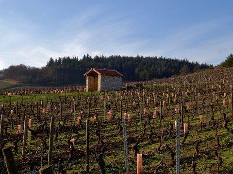 Vignoble Bourguignon à Mercurey.