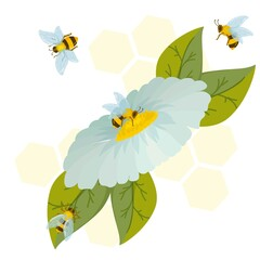 white chamomile flower with green leaves. bees on kalndula flowers, a composition of flowers and bees on a honeycomb background. vector illustration