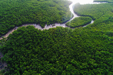Aerial top view green tropical mangrove forest with river to sea bay morning sunrise ecology system