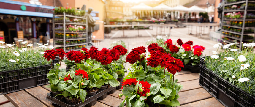 Flowers in pots at the market. Flower market, shop on a city street. Gardening.
