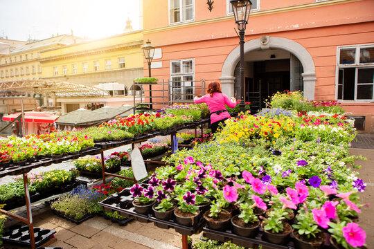 Seedling flowers on the market. Flower market, shop on a city street. Gardening.