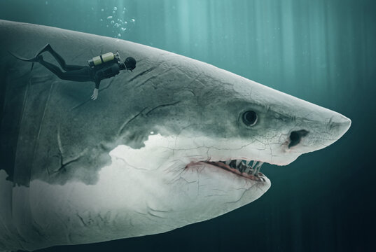 diver encounters a megalodon - Illustration