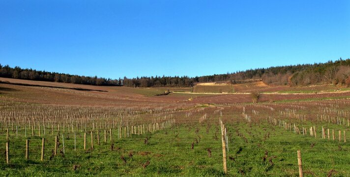 Vignoble de Mercurey dans la Côte Chalonnaise en Bourgogne.