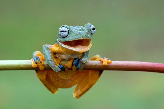 Smiling frog on a tree branches