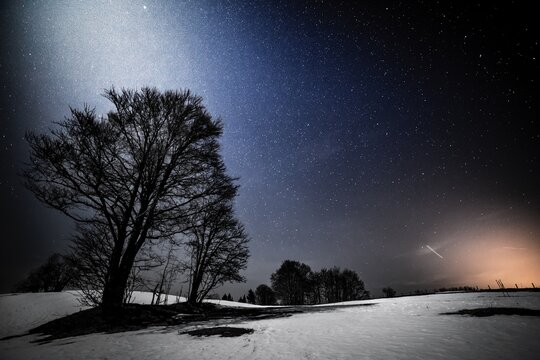 Trees On Snow Covered Landscape Against Clear Sky At Night