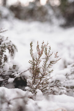 snow covered nature