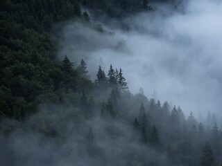 Low hanging clouds foggy green forest treetop misty mood nature landscape at lake Konigssee Bavaria...