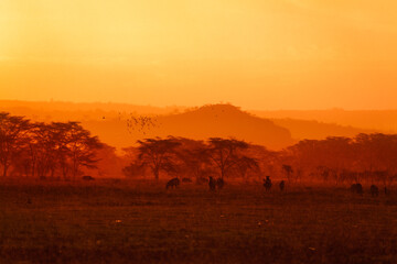 Evening landscape with many animals in Kenyan savanna in yellow and orange colors