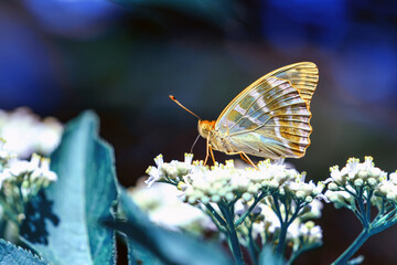 Macro shots, Beautiful nature scene. Closeup beautiful butterfly sitting on the flower in a summer garden.