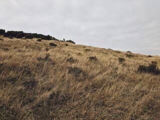 Fototapeta Scenic View Of Field Against Sky obraz
