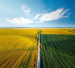 Wall Mural - Aerial top view of rural road passing through agricultural land and green fields.