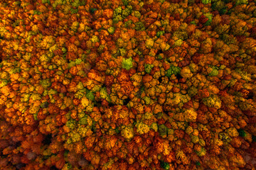 Wall Mural - Picturesque aerial view of overhead colorful woods in the mountains.