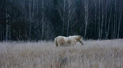 Fototapeta Horse In A Field obraz