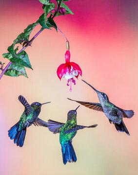 hummingbirds and flower