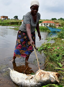A woman looks at a fish that died and was swept by the waves to the shores of Lake Victoria in at the Kigungu landing site in Entebbe