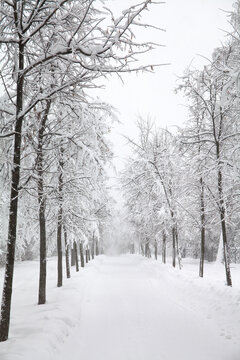 Snowy winter road. Snowfall in the park, snow covered trees landscape.