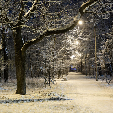 Cold winter evening park landscape. Snow covered trees.