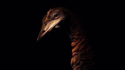 ostrich head in penubre in museum of natural sciences