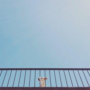 White short coated dog on white metal railings