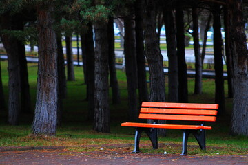 Fototapeta Empty Bench In Park obraz