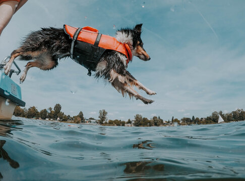 Dog jumps on sea at daytime