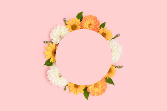 Wreath made of dahlia and arnica on a pink background. Flower round frame with copyspace.