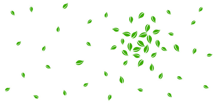 Falling green leaves. Fresh tea random leaves flying. Spring foliage dancing on white background. Amazing summer overlay template. Cool spring sale vector illustration.