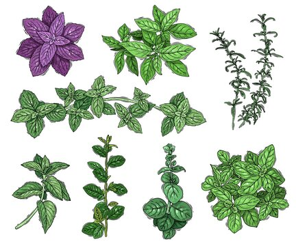 Sketch herbs coloured set