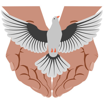 Gray bird - dove with its wings spread, taking off from open palms of human. Concepts: Bird of peace being released. Dove, traditionally going from hands during wedding ceremony, as symbol of loyalty.