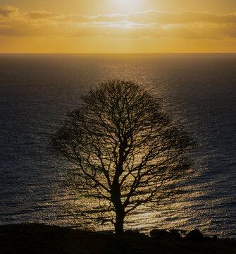 Solitary tree at winter sunrise, causeway coast and glens, Torr Head, County Antrim, Northern Ireland